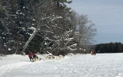 Mushing in Maine
