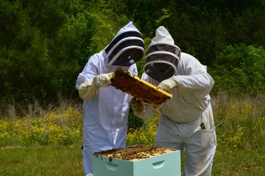 Senior+Channell+Cole+inspects+bees+with+Mr.+Rusty+Horton.++The+St.+George%27s+beekeeper+position+is+now+available+because+Cole+is+graduating.+